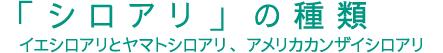 「シロアリ」の種類(イエシロアリとヤマトシロアリ、アメリカカンザイシロアリ)